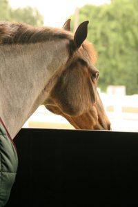 horse-189654_1920