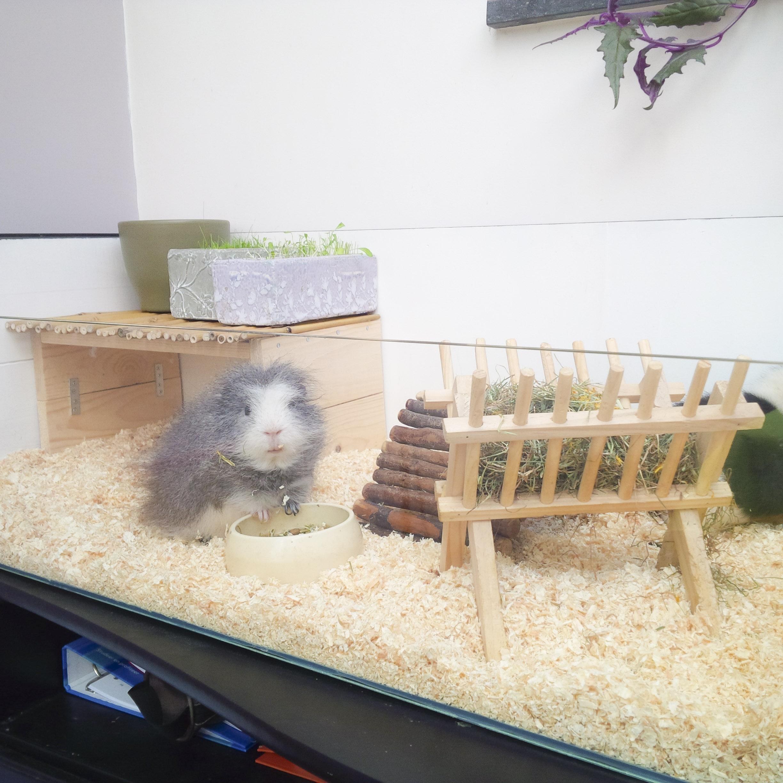 Zelf een caviahok maken huisdier inside for Zelf een tuintafel maken